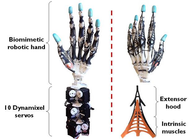 Mano robotica antropomorfa simile a quella umana. Close-up Engineering