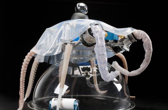 Gara robot soffici, soft robot week 2016. Close-up Engineering